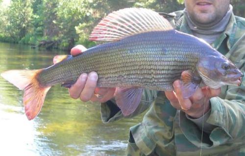 Летняя рыбалка на хариуса