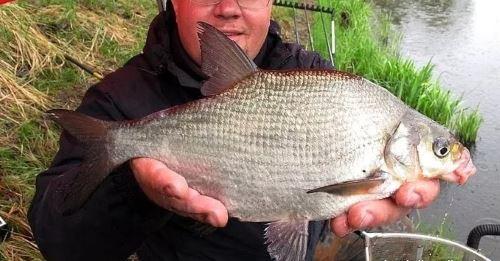 Перловка для рыбалки на леща