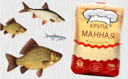 Как сделать тесто из манки для рыбалки