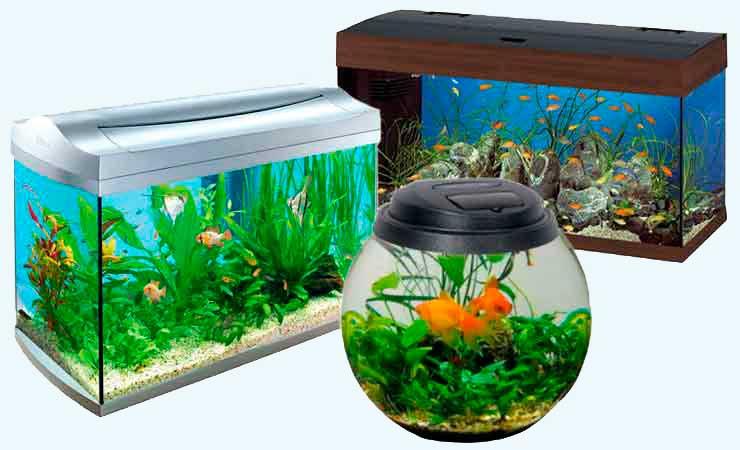 Виды аквариумов