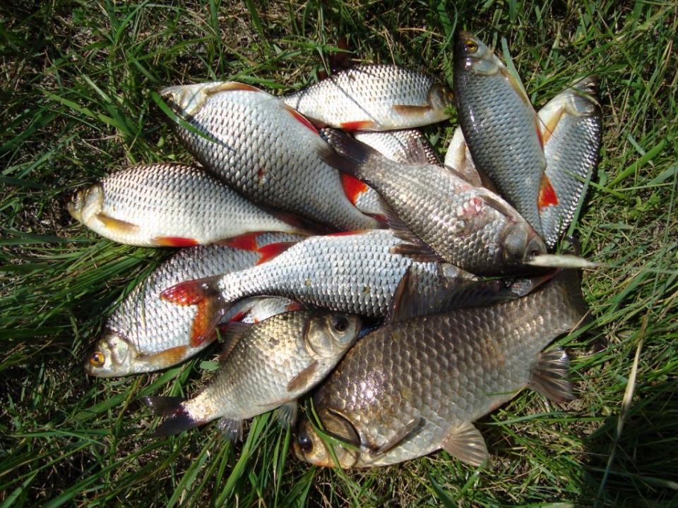 Где порыбачить в Украине