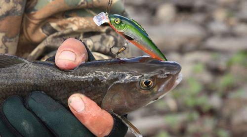 Осенняя рыбалка на хариуса